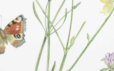 Les Papillons de Gérard de Nerval